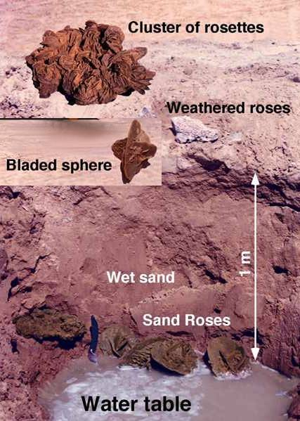 Sahara Sand Rose from Algeria
